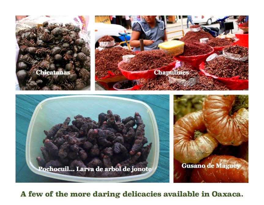 Chapulines, Gusanos, Gusano de Maguey, Chicatanas, Pochocuil, Bug Foods